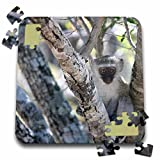 Angelique Cajam Safari Animals - South African Vervet Monkey in tree - 10x10 Inch Puzzle (pzl_20127_2)