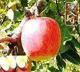サンふじりんご 約40玉10kg ランキングお取り寄せ
