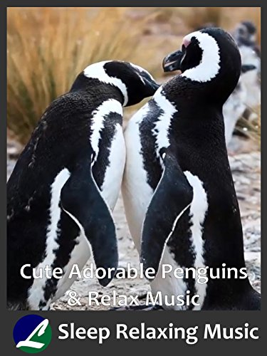 Cute Adorable Penguins & Relax Music
