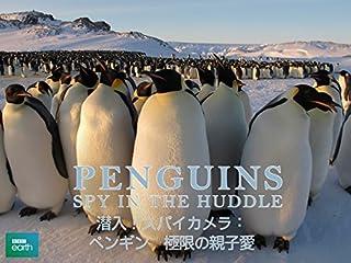 潜入!スパイカメラ〜ペンギン 極限の親子愛