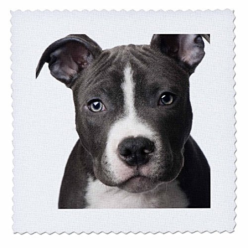 3dRose qs_4240_4 American Pit Bull Terrier Puppy-Quilt Square, 12 by 12-Inch (Pitbull Quilts compare prices)