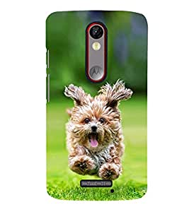 Vizagbeats Bichon Frise Running in Lawn Back Case Cover for Motorola Moto X force
