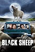 Black Sheep