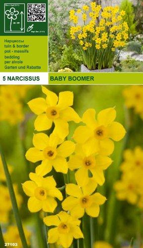 zwergnarzisse-narcissus-baby-boomer-
