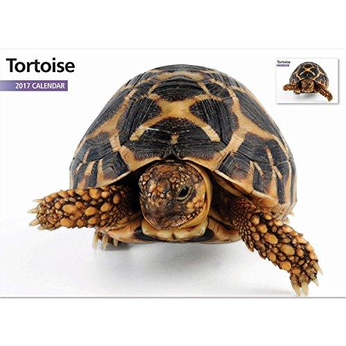 2017 Tortoise Wall Calendar