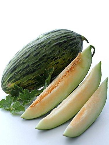 piel-de-sapo-melon-seeds-1-g-35-seeds