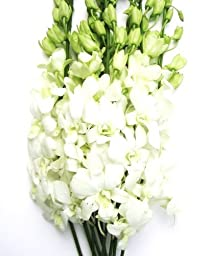 Fresh Cut Flowers - Dendrobium Orchids White
