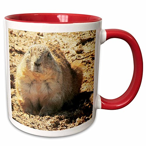 3dRose Jackie Popp animals - Prairie Dog - 11oz Two-Tone Red Mug (mug_195194_5)