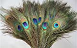 Pack of 30pc Natural Peacock Feathers 10-12
