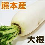 あいあい 熊本県産 大根/だいこん 1本 【野菜セット同梱で】【九州 野菜】【ダイコン】【根菜】