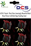 (029) 5 Seeds / Pack, Rare Amazingly Beautiful Black Rose Flower with Red Edge Seedling Seed