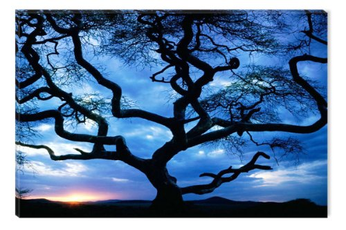 Startonight Canvas Wall Art Amazing Sunset Behind the Tree, Trees USA Design for Home Decor, Dual View Surprise Wall Art 31.5 X 47.2 Inch 100% Original Art Painting! (Sunset Oil Painting compare prices)