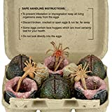 NECA Alien Carton of Eggs Accessory Pack