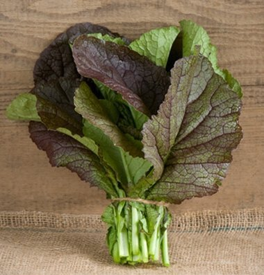 davids-garden-seeds-mustard-greens-red-giant-d378-multi-color-500-organic-seeds