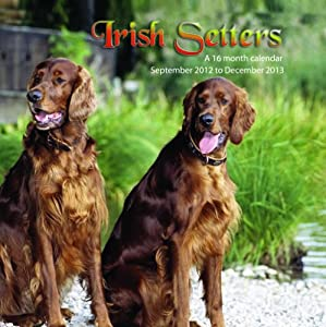 Irish Setters 2013 Wall Calendar