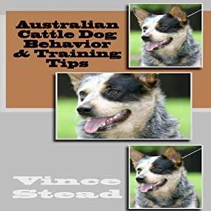 Australian Cattle Dog Behavior & Training Tips | [Vince Stead]