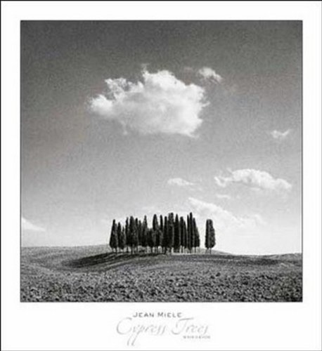 Cypress Trees Poster Print By Jean Miele (28 X 30)