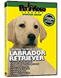 Labrador Retriever DVD + Dog & Puppy Training Bonus