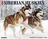 Just Siberian Huskies 2015 Wall Calendar (Just (Willow Creek))
