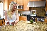 EcoQube Aquarium- Desktop Aquarium Kit for Betta Fish Office Decor and Home Decor