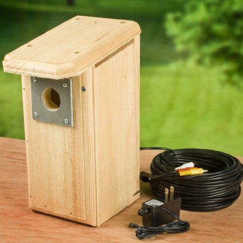 Backyard Birdhouse W/ Hawk Eye Nature Cam Installed. Bird Watcher'S Dream