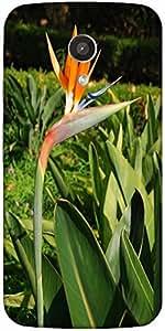 Snoogg Beautiful Strelitzia Flower Designer Protective Back Case Cover For Mo...