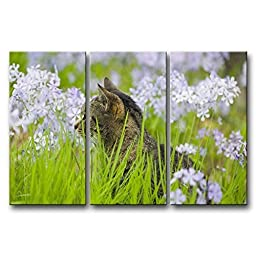Canval prit painting 3 Panel Wall Art Cat In The Grass With White Flower s On Canvas The Picture Animal Pictures Oil Decor For Bedroom