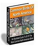 Common Birds of North America - Illustrated Guide to 50 Most Common North American Birds!