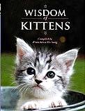 Wisdom of Kittens