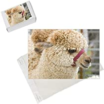 Photo Jigsaw Puzzle of An Alpaca from Specialist Stock