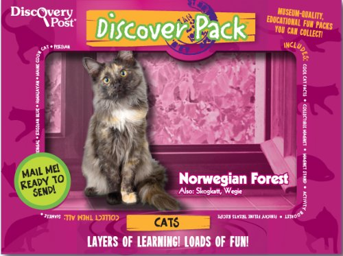 Cat Discover Pack, Norwegian Forest Cat - 1