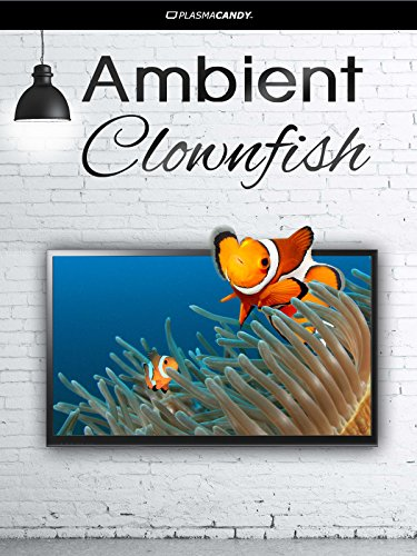 Ambient Clownfish