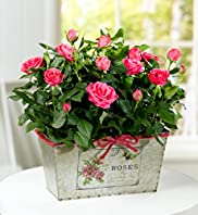 Luxury Rose Trough