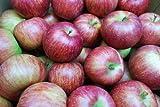 9月1日(月)より順次発送開始予定!山形県産 訳あり  りんご10kg(葉とらず栽培)