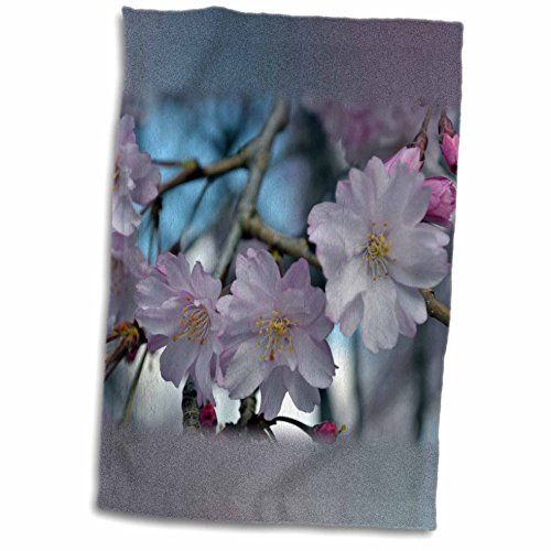 WhiteOak Photography Floral Prints - Cherry Blossom Tree - 11x17 Towel (twl_45340_1)