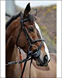 Photographic Print of Kauto Star from Colorsport