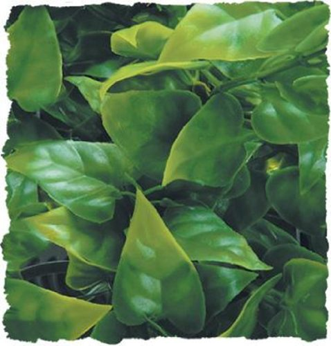 zoo-med-natural-bush-mexican-phylo