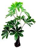 1stモール フェイクグリーン リアルプラント11 緑 会社 おしゃれ 造花 部屋 観葉植物 人工 インテリア 大型 リアル ST-QX-E11-60