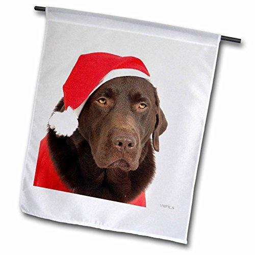 3drose fl 45547 1 labrador hund verkleidet als santa. Black Bedroom Furniture Sets. Home Design Ideas