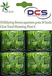 DCS (048) Spring Bonsai aquarium grass 10 Seeds Clear Novel Blooming Plant-8
