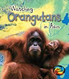 Watching Orangutans in Asia (Wild World)