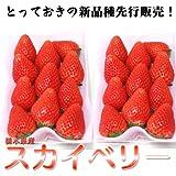 栃木県産 スカイベリー デラックスタイプ 約300g×2パック  【期待の新品種をお試し価格でご奉仕!】
