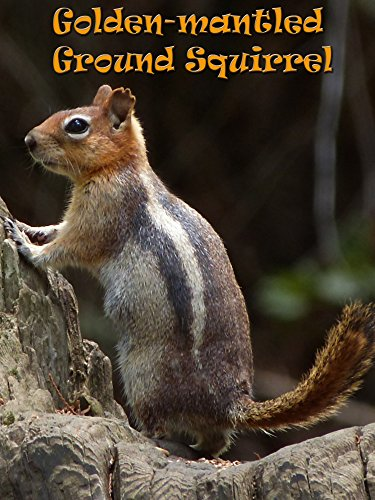 Golden-mantled Ground Squirrel on Amazon Prime Instant Video UK