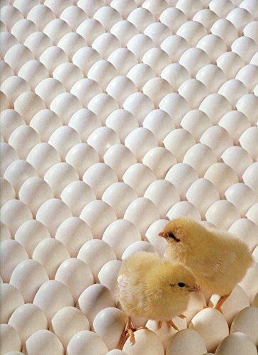 Hoyle Eggxtra! Eggxtra! Jigsaw Puzzle (550-Piece)