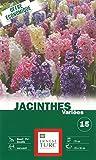 Ernest TURC Pack de 15 Bulbes Jacinthe Assortiment Varie Multicolore 13,5 x 7 x 23 cm 109006