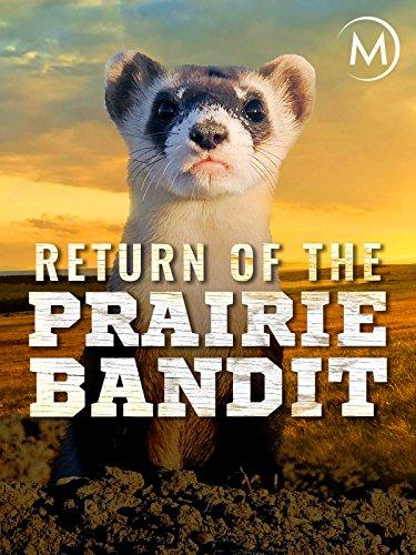 Return of the Prairie Bandit on Amazon Prime Video UK