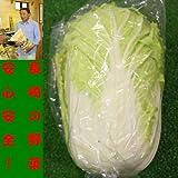 九州 長崎県産 農産物直売所 販売用 白菜