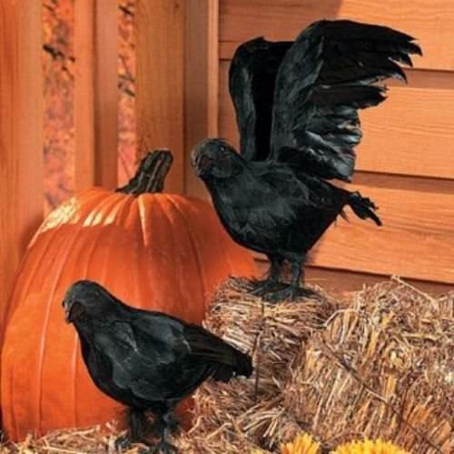 Realistic Feathered Crows -Set of 2 - Great Halloween Prop! - 1