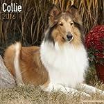 Collie Calendar 2016 (Square)