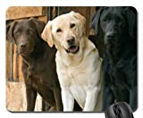 labrador retrievers Mouse Pad, Mousepad (Dogs Mouse Pad)